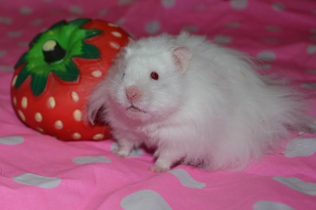 Chubby castiel :)