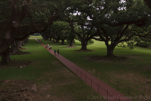 park usa tree alley louisiana historic antebellum 2014 oakalleyplantation usa2014 timezonect
