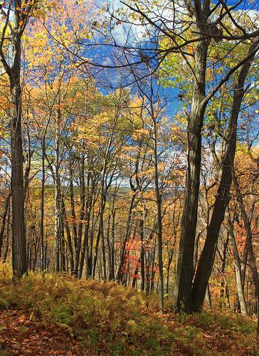 autumn trees sky nature forest hiking pennsylvania foliage creativecommons deciduous bluemountain appalachianmountains undergrowth kittatinnymountain carboncounty understory lehighgap lehighgapnaturecenter temperatedeciduousforest