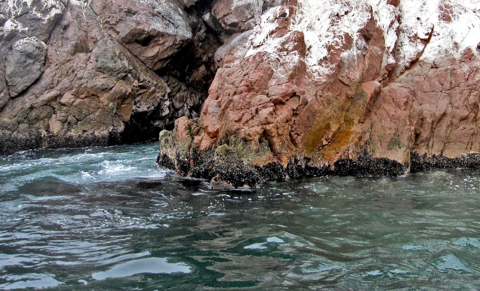 Islas Ballestas 51