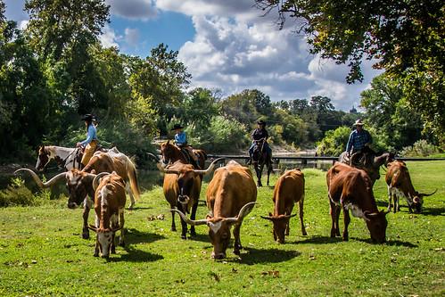 Chisholm Trail Days-Georgetown, Texas