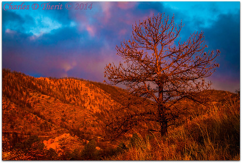 1250 2014 35350mm 45 63mm 7d 7dmark1 bokeh burntpine burnttree canon classic colorado coloradosprings ef35350mmf3556lusm eos7d explore explored foothills gleneyrie morningsunlight mountainshadows nature northamerica pinetree rockymountains sunrise superzoom telephoto unitedstates usa infinitexposure best wonderful perfect fabulous great photo pic picture image photograph esplora