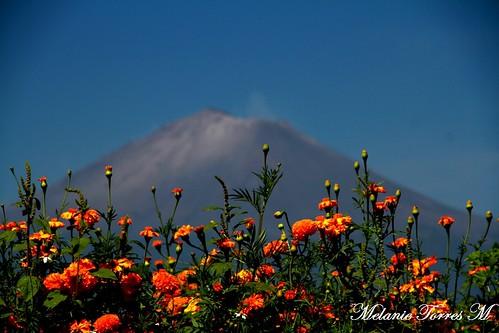 Cempasúchil y Popocatépetl