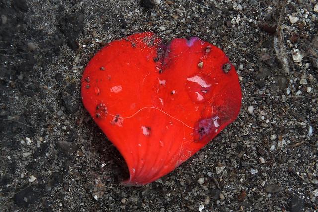 petal heart#56345ep