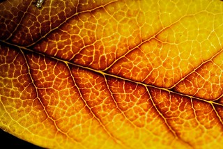 Vegetal Veins | by brunaita