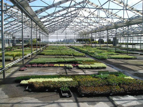 Launch of the Open Innovation Challenge: Greenhouses