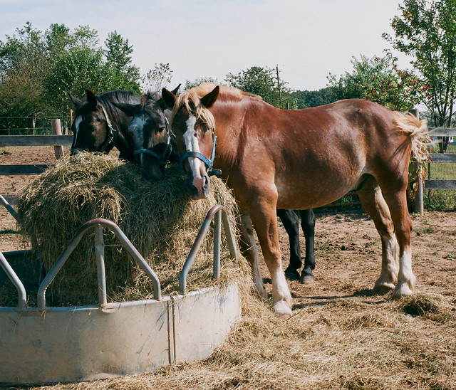 the hay after breakfast