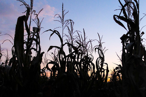 sunset halloween newjersey corn unitedstates farm nj chester maze cornmaze x20 2014 stonyhillfarm fujix20 fujifilmx20
