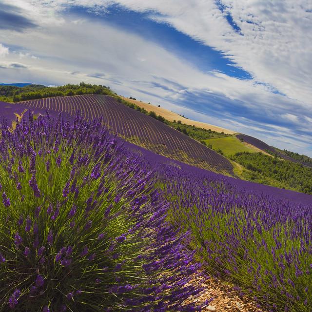 Beautiful Provence (1)