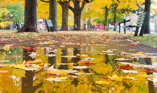 Dundonald Park, Ottawa | by cjuneau