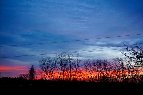 morning trees winter sky fall silhouette sunrise dawn michigan annarbor