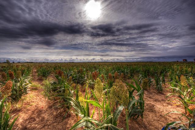 Field near Cadillac Ranch - Amarillo - Texas - USA