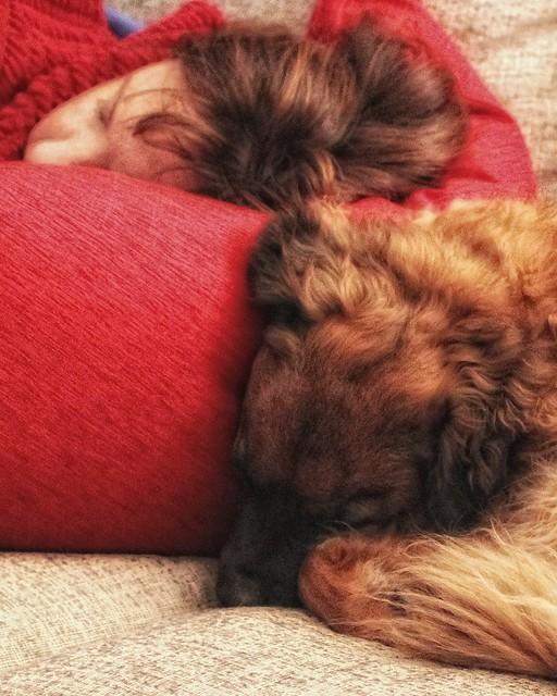 Great Minds Sleep Alike