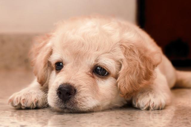 COKI Está triste