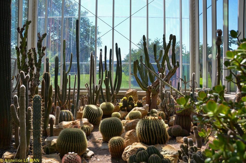 Cactus Dans La Serre Temperee Du Jardin Botanique De Genev Flickr