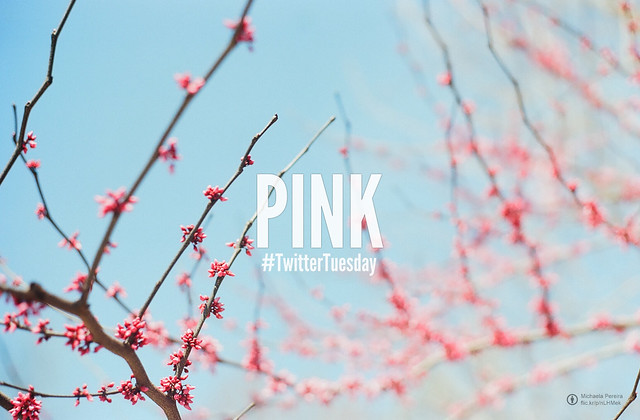 #TwitterTuesday: Pink   Show us the pink in your day and your life! Share your best #Pink shot from your Flickr account to @flickr and add the hashtag #TwitterTuesday and #Pink