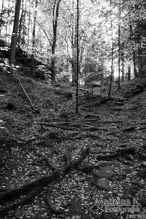 Wald | Projekt 365 | Tag 285
