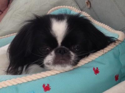 Sleepy Sleepy Oliver in his Bed