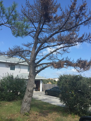 Outer Banks Tree Service | by OBX Tree Service