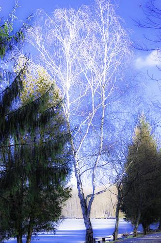 croatia colors trees lakes winter