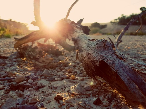 rama branch atardecer sunset sol sun cielo sky mainland tierra piedras stones naturaleza nature
