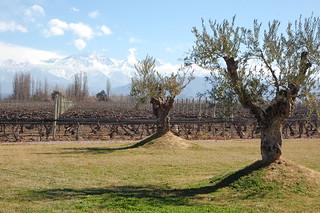 Wine Tasting at Belasco de Baquedano in Luján de Cuyo, Mendoza, Argentina   by blueskylimit