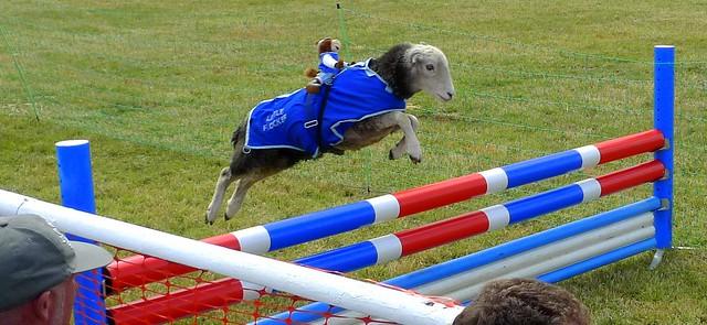 A Woolly Jumper