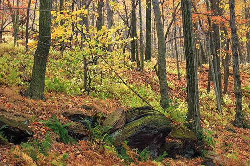 autumn trees nature forest rocks hiking pennsylvania foliage creativecommons deciduous bluemountain appalachianmountains undergrowth kittatinnymountain carboncounty understory lehighgap lehighgapnaturecenter temperatedeciduousforest