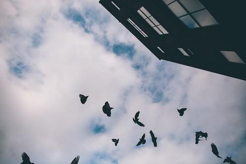The flock | by Denn-Ice