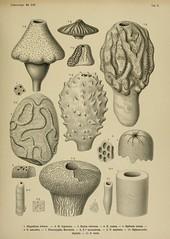 Roemer, 1864. Die Spongitarien des norddeutschen Kreidegebirges