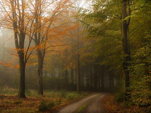 road autumn trees nature sweden autumnleaves bushes halland