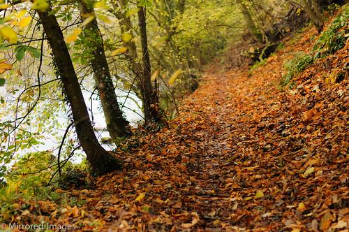 autumn trees colour leaves woodland landscape footpath codurham teesdale northeastengland rivertees teesdaleway