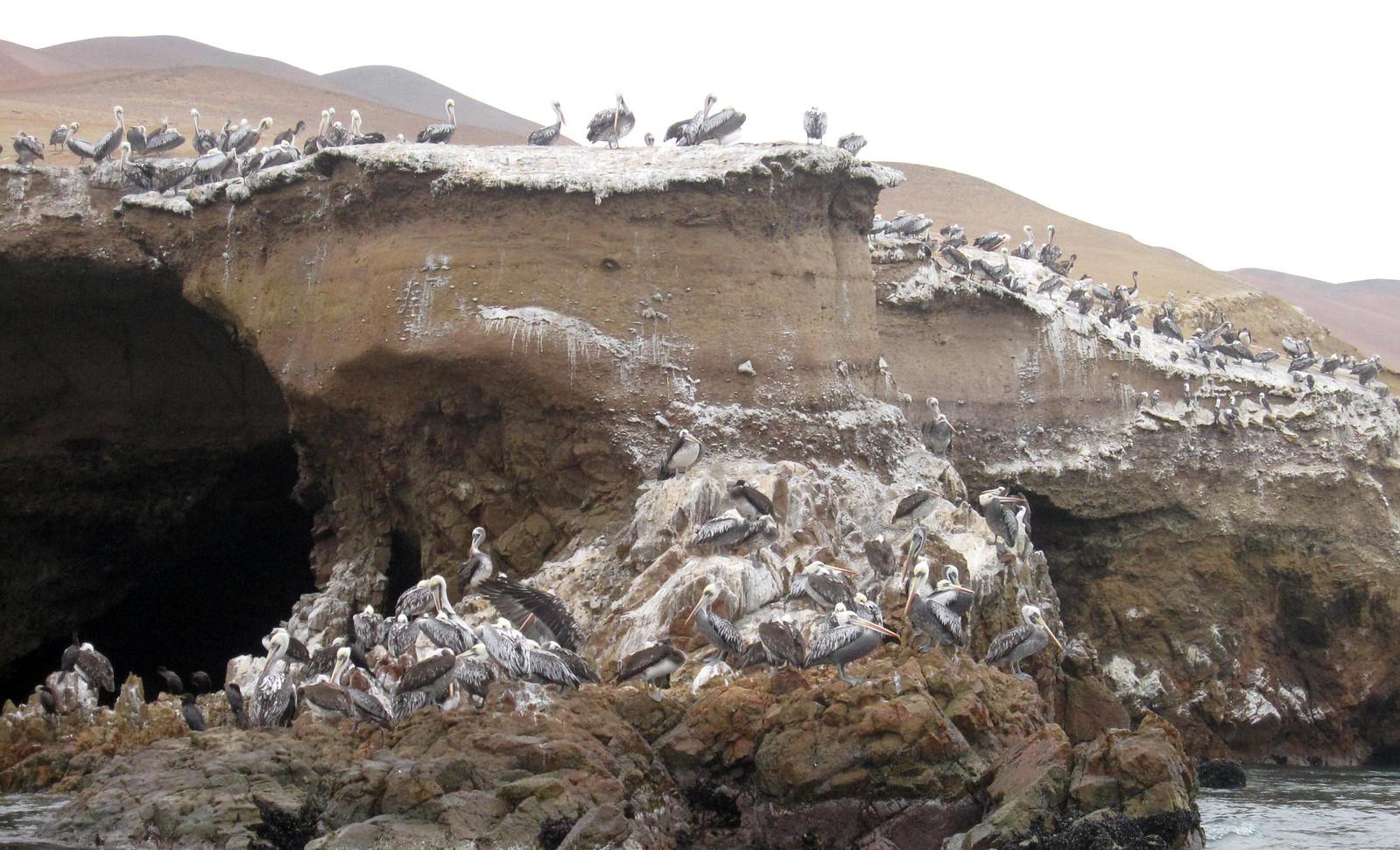 a Islas Ballestas 09