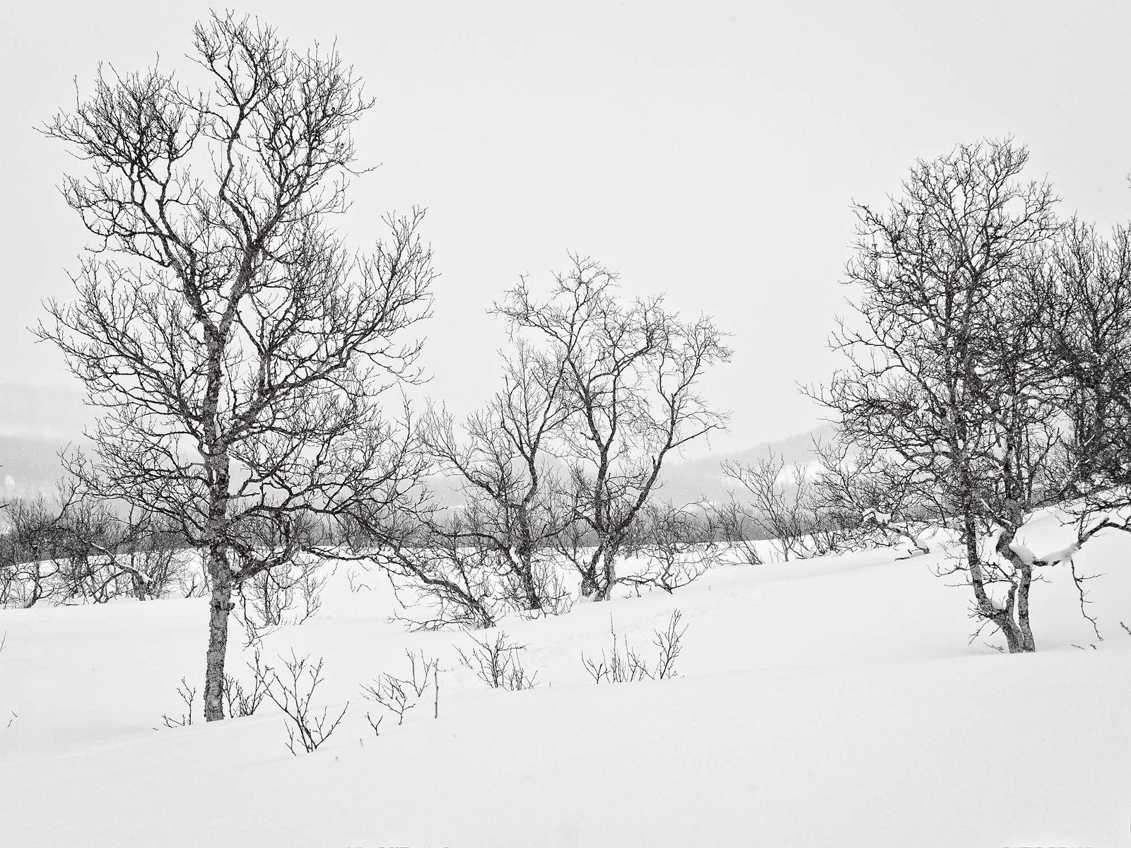 Trees in winter-2