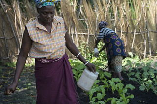 People working in community garden, Zambia. Photo by Anna Fawcus. | by WorldFish