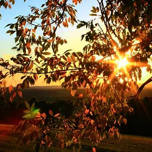autumn sunset sky sun tree fall nature leaves weather season landscape fallfoliage rays uploaded:by=instagram foursquare:venue=4bedc2d52a7bb713271acf9d