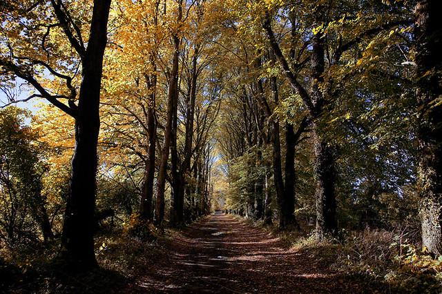 Autumn Lane, Donadea, Co kildare, Ireland.
