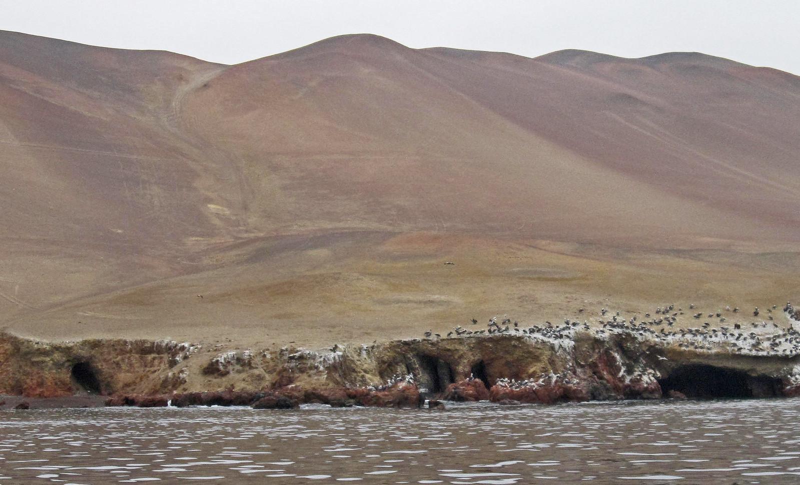 a Islas Ballestas 15