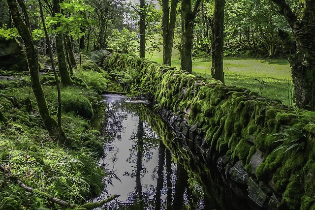 Green wall, floating brook and trees