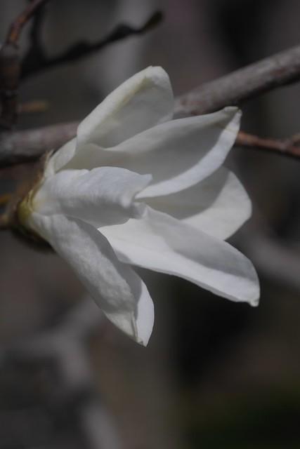 日, 2017-04-02 12:54 - Brooklyn Botanical Garden