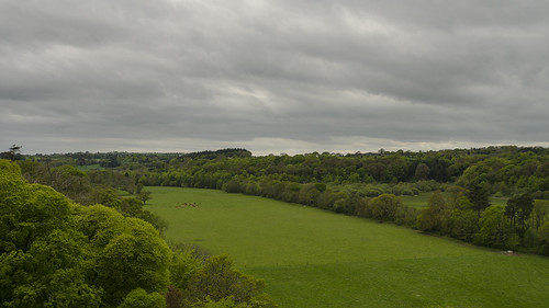 county ireland landscape woods europe day tour cattle cloudy farm cork farming sightseeing tourist pasture blarney grazing