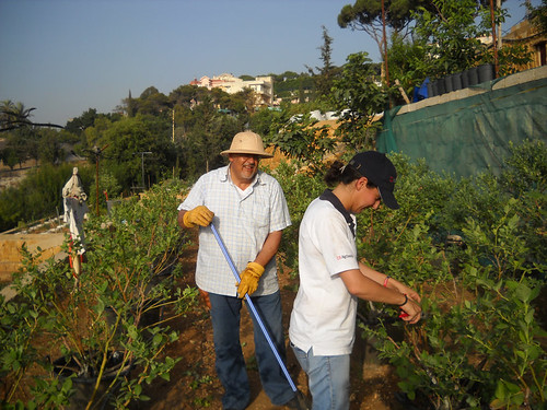Talal & Sarah Pruning Blueberry planst Jun 19, 2014 | by toutberryfarms