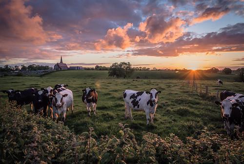 sunset church field cows eveningsun sunday gree coi portadown churchofireland countyarmagh drumcree drumcreeparishchurch