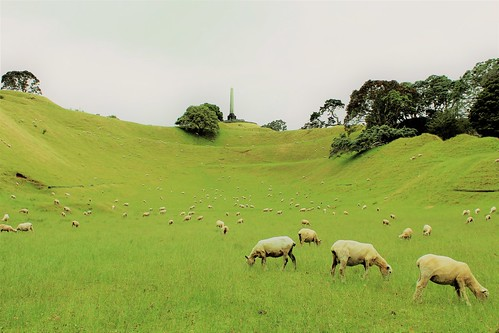auckland newzealand world amazing popular fabulous interesting canon camera light photography picture color cornwall park one tree hill sheep animal grassland