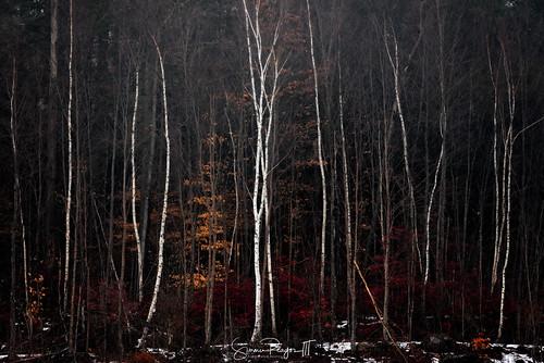 2017 colebrook connecticut connecticutphotographer fog ice landscape landscapephotography mist morning nature naturephotography outdoors seascape sunrise unitedstates colebrookdamreservoir colebrookriverlake digital water us