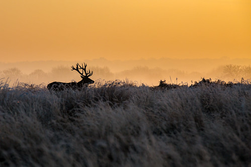 london richmondpark canon deer nature park photo richmond sunrise sunset wildlife unlimitedphotos