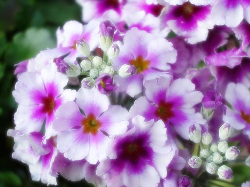 20050122flower1