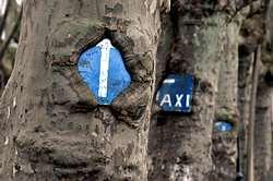 Señales en los árboles