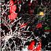 New Neurons Born in Adult Rat Cortex