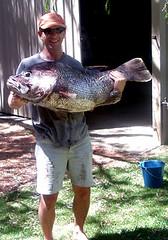 gregandthegiantfish